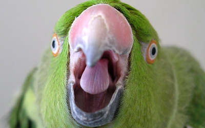 Is your Parrot cranky?